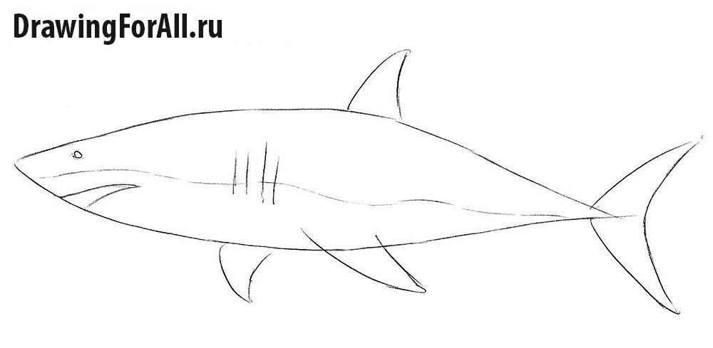 Как нарисовать акулу карандашом поэтапно