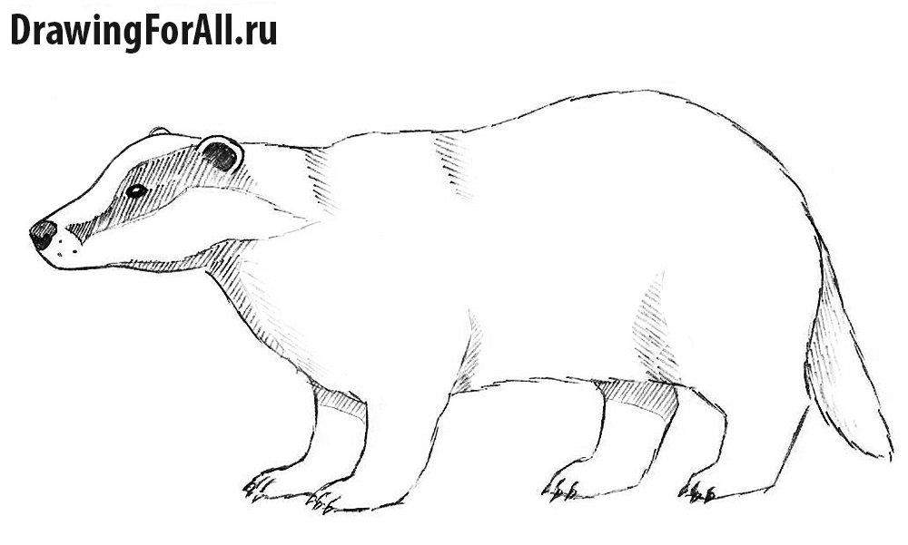 Как нарисовать бобра