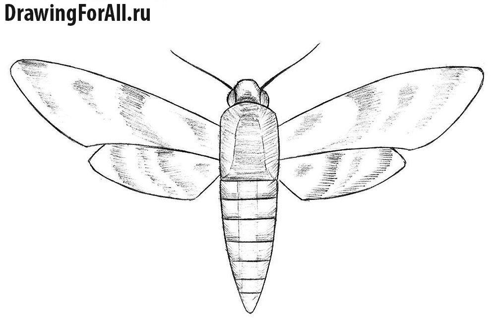 как нарисовать мотылька