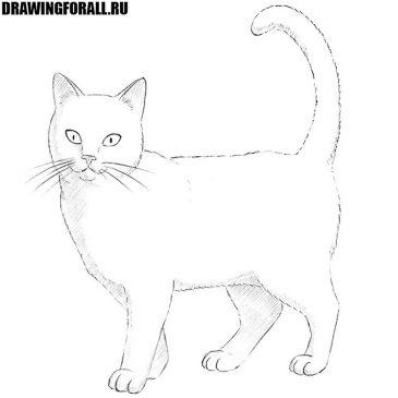 Как нарисовать кошку шаг за шагом